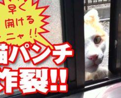 猫パンチで窓を開けようとするネコのおもしろ動画